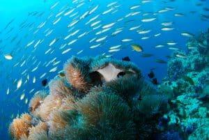 poisson en plongée